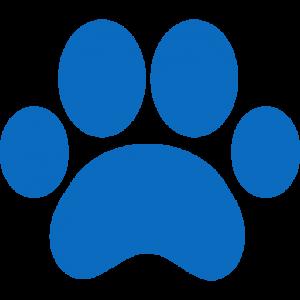 Seguro-para-mascota-Mexico