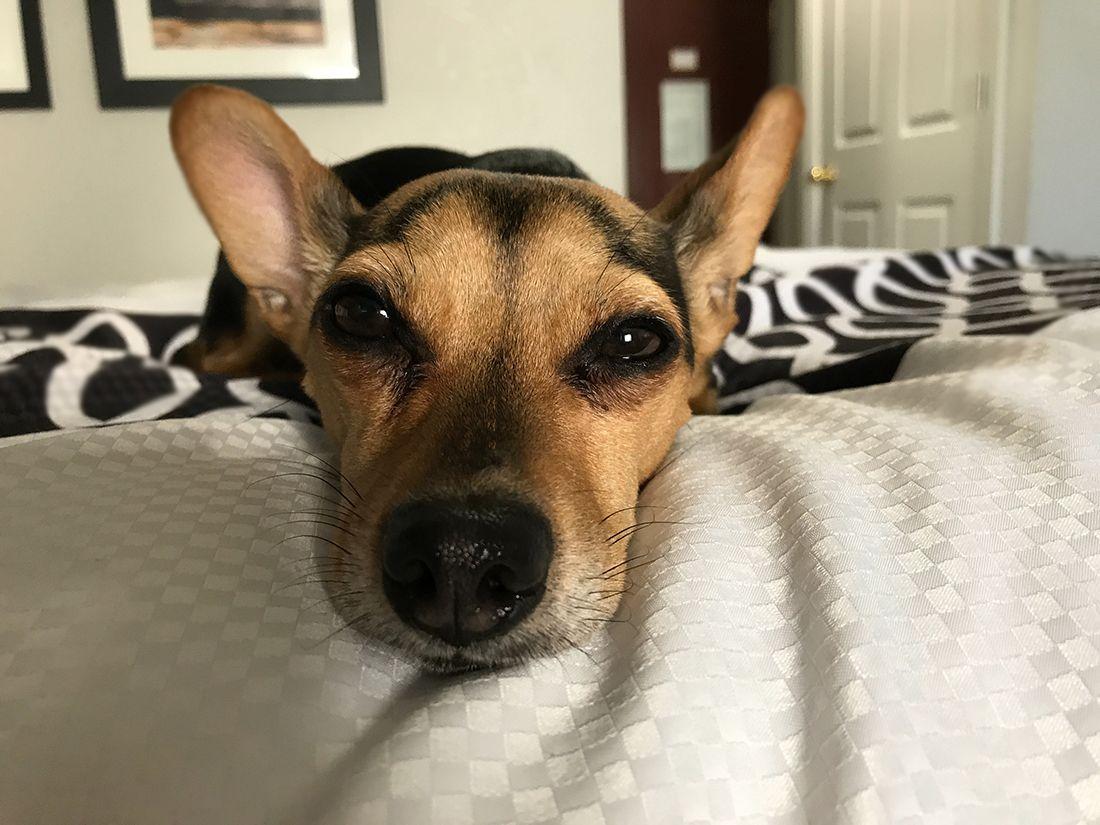 Qué-pasa-si-tu-perro-tiene-glaucoma-en-México