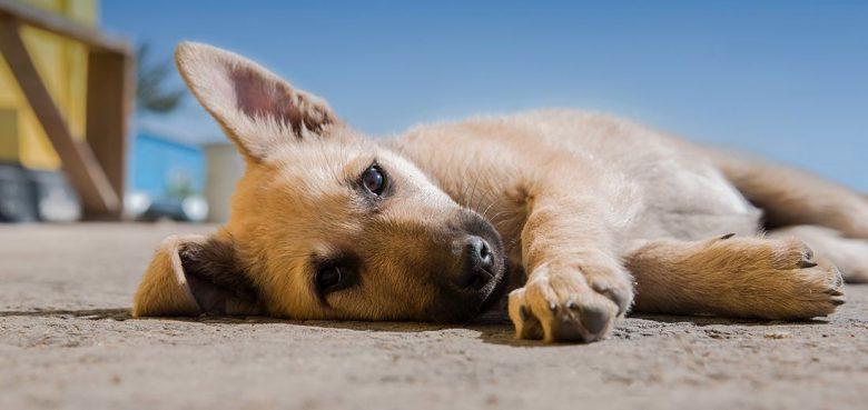Mi-perro-se-comió-que-seguro-de-perro