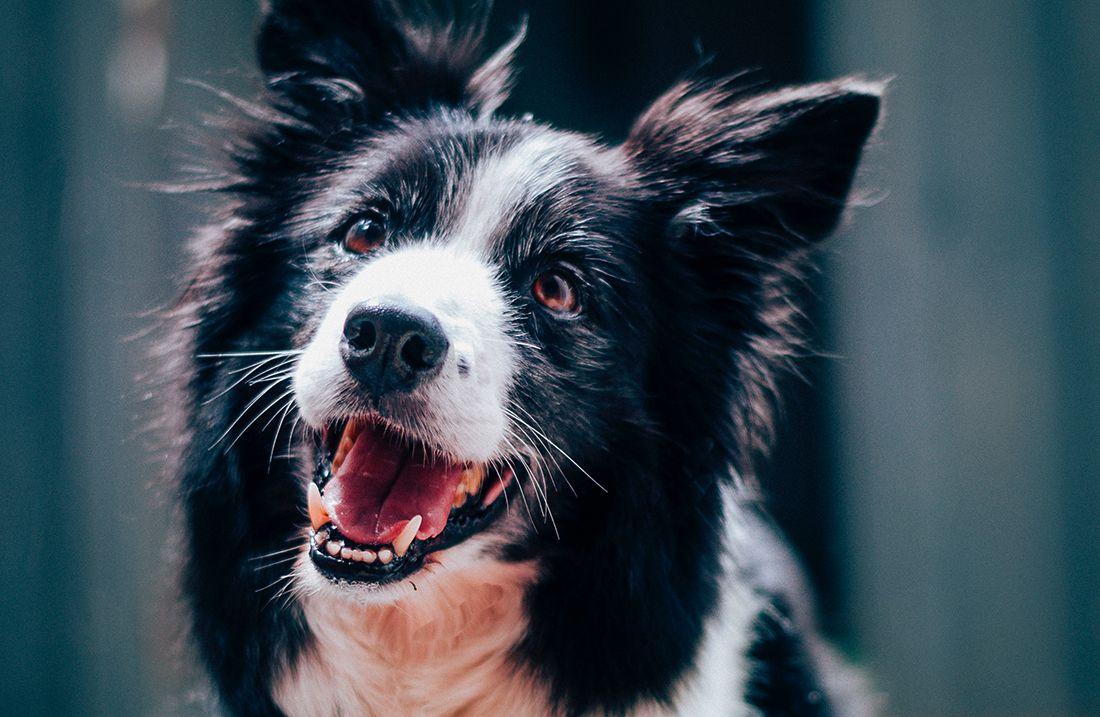 Remedios caseros para mejorar la salud de tu perro en México