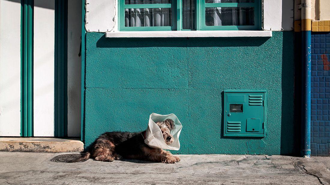 Emergencias veterinarias que puede cubrir tu seguro de perro