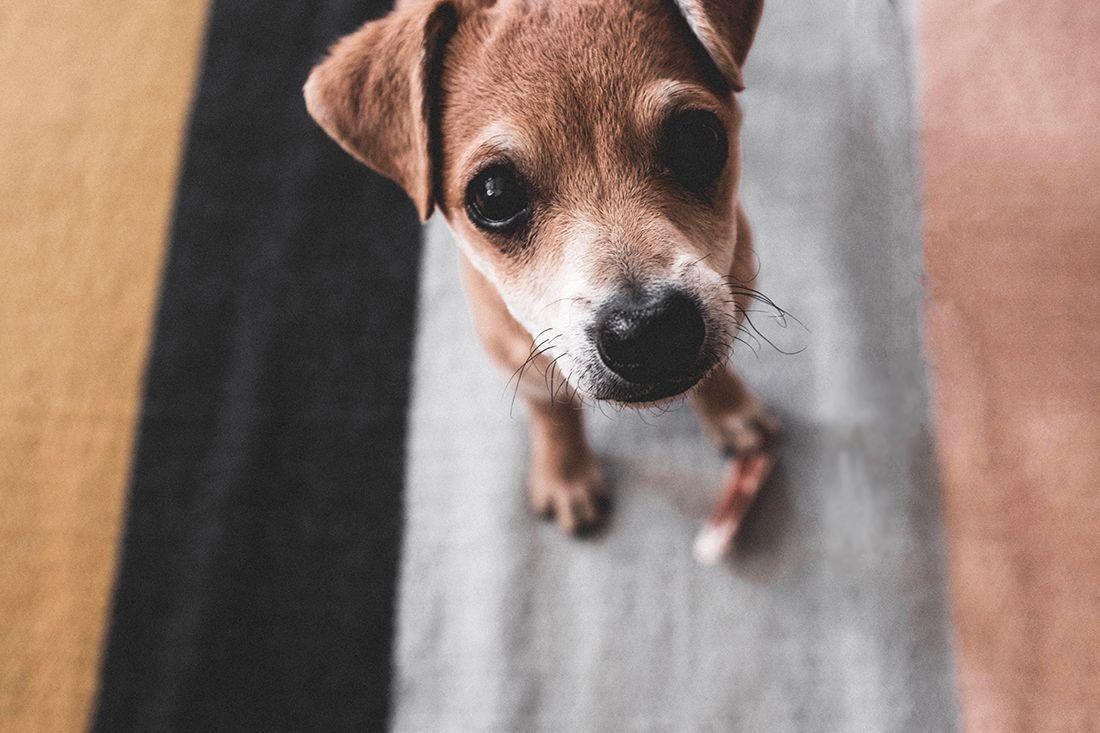 Razones-comunes-por-las-cuales-tu-perro-visita-el-veterinario-y-cuanto-te-cuesta