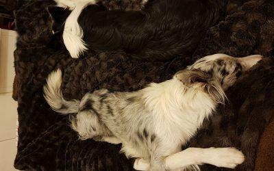 Cuida a tu mascota en todo momento con un seguro para perro