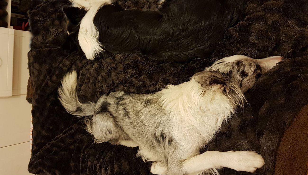 Cuida-a-tu-mascota-en-todo-momento-con-un-seguro-para-perro-mexico